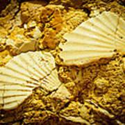 Seashell In Stone Poster by Raimond Klavins