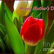 3 Tulips For Mother's Day Poster