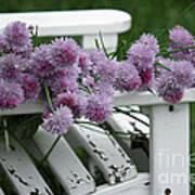 Wild Onion Flowers Poster