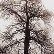 Winter Tree In Fog Poster