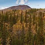Yukon Gold - Fall In Yukon Territory Canada Poster