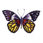 31 Delias Henningia Butterfly Poster