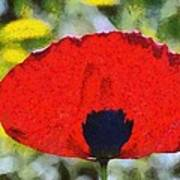 Poppy Flower Poster
