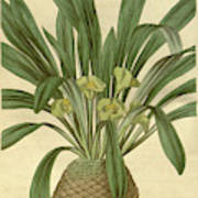 Botanical Print Or English Natural History Illustration Poster