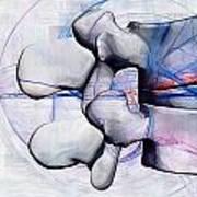 Lumbar Spine Poster