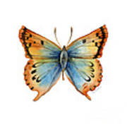 33 Opal Copper Butterfly Poster
