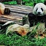 3722-panda -  Acanthus Sl Poster