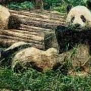 3722-panda -  Colored Photo 2 Poster