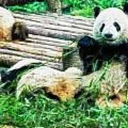 3722-panda -  Oil Stain Sl Poster