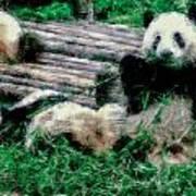 3722-panda -  Pastel Chalk 1 Poster
