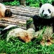 3722-panda -  Watercolor 1 Poster