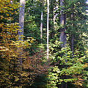 Autumn 8 Poster