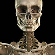 Bones Of The Head And Upper Thorax Poster