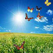 Colorful Buttefly Spring Field Poster