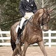Dressage Horse Portrait Poster