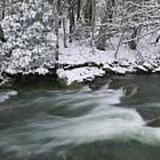 Snow Covered Pine Trees On The Side Of A River In The Winter. Poster