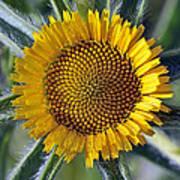 Spring Wild Flower Poster