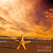 Starfish On The Beach At Sunset Poster