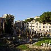 The Sacred Area Of Largo Argentina Poster