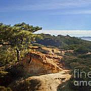 Torrey Pines State Park - California Poster