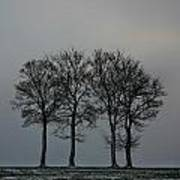 4 Trees In A Winters Landscape Poster
