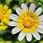 Wild Daisies Poster