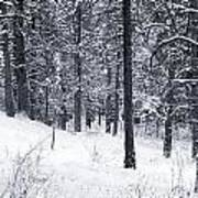 Winter In Pike National Forest Poster