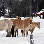 40104-5 Norwegian Horses Poster