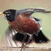 An Entertaining Baby American Robin Poster