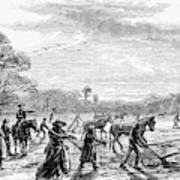 Cotton Plantation, 1867 Poster