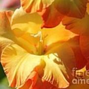 Gladiolus Named Halloween Poster