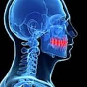 Human Teeth Poster