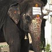Lakshmi Temple Elephant Poster