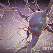 Neuron Poster