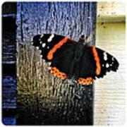 Phoenician Butterfly Poster