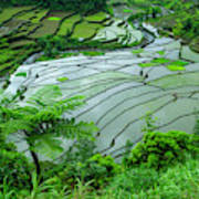 Unesco World Heritage Site, Rice Poster
