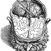 Vesalius: Brain, 1543 Poster