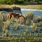 Wild Spanish Mustang Poster