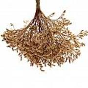 Hanging Dried Flowers Bunch Poster