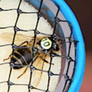 Honeybee Radar Tagging Poster