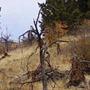 Montana Landscape Poster