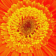 Orange Gerber Poster