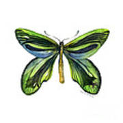 6 Queen Alexandra Butterfly Poster