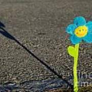 Smile Flower Poster