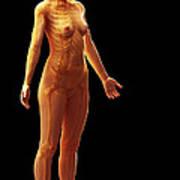 The Skeletal System Female Poster