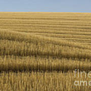 Tracks In Field Poster