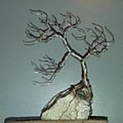 #63 Windswept Bonsai Tree root over rock Poster