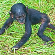 Bonobo Baby Poster