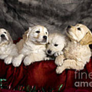 Festive Puppies Poster by Angel  Tarantella