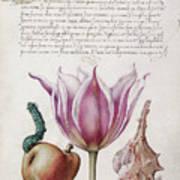 Illuminated Manuscript Poster